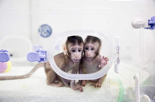 Лучшие научные фотографии 2018 года по версии журнала Nature