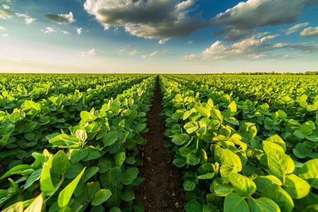 Мировой продовольственный рынок может сократиться натреть к2100 году из-за климат-кризиса