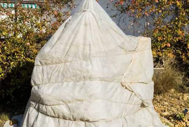 Саженцы плодовых деревьев: укрытие на зиму