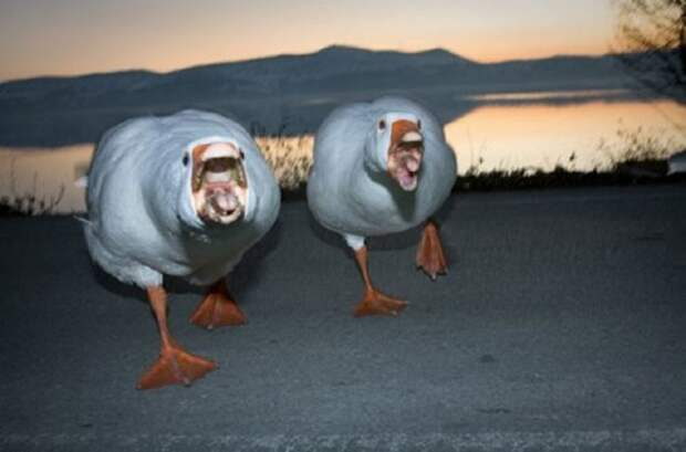 Забавные животные, которые заставят вас улыбнуться (31 фото)
