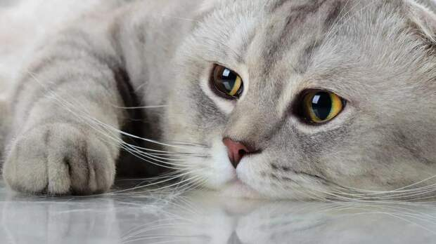 Депрессии и угнетенное состояние: как справиться с негативными эмоциями у кошек