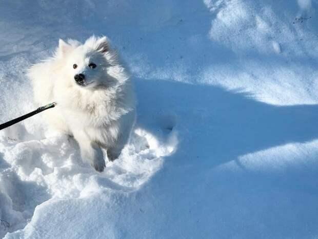 Сам как снежок