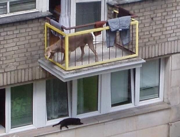 Некоторые предпочитают держать на ограниченной площади небольшой зоопарк балкон, балконы, на балконе, прикол, че за хрень на балконе?, юмор