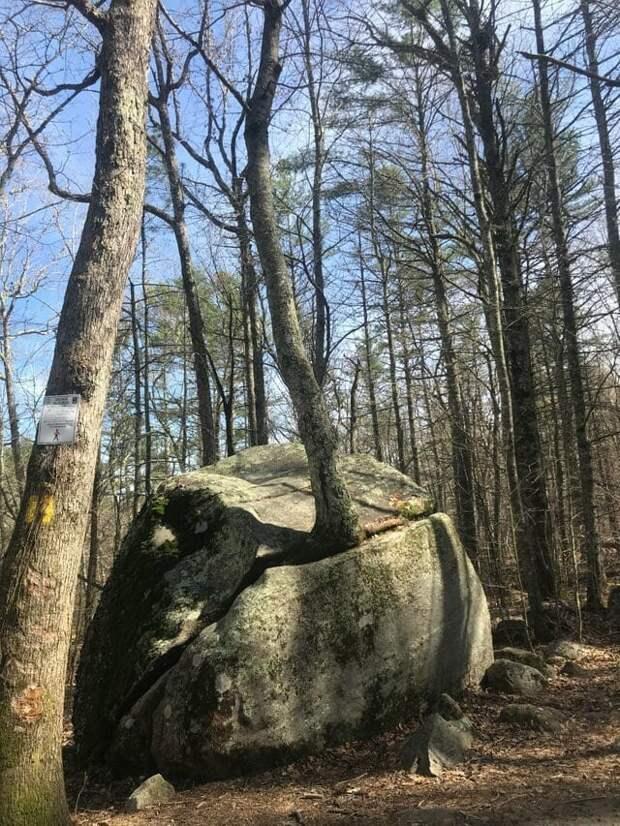 2. «Скала с деревом, растущим из неё, похожа на лягушку, которая высунула язык» в мире, подборка, природа, удивительно, фото