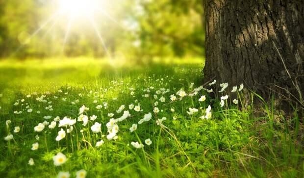ВСтаврополе высадили 34тыс цветов