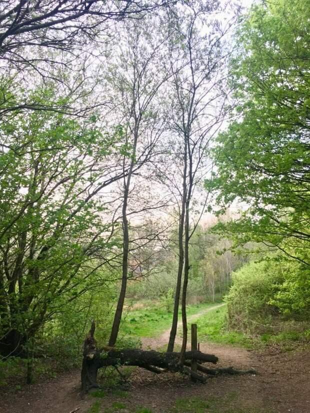 12. «Дерево упало, и из него выросло два новых» в мире, подборка, природа, удивительно, фото