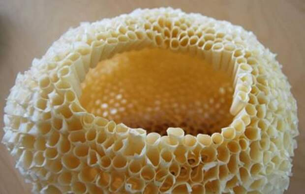 Кораллы своими руками для украшения интерьера в морском стиле (10) (544x347, 97Kb)