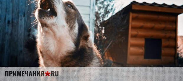«Собака лает, караван идет»: Малышев о реакции Украины на выборы в Крыму