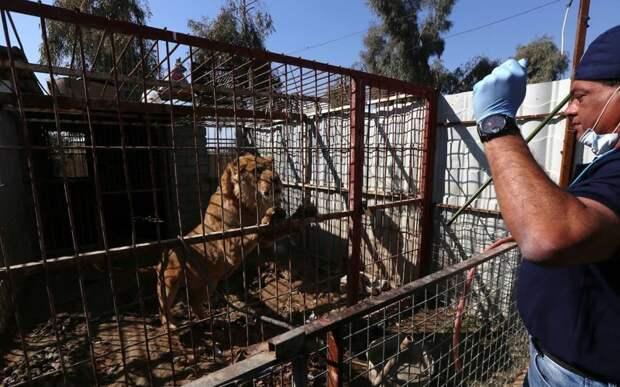 Доктор, который спасает зверей из горячих точек планеты защита животных, зоопарки, люди, миссия