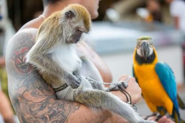 В Анапе у фотоживодеров отобрали редких животных