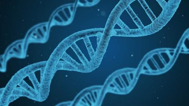 Анализ ДНК позволил ученым из Канады впервые опознать участника экспедиции Франклина