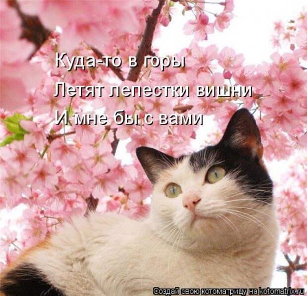 1556890776_kotomatricy-23 (500x483, 218Kb)