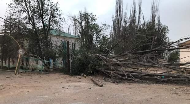 Пыльная буря стала причиной падения дерева на ребенка в Астраханской области