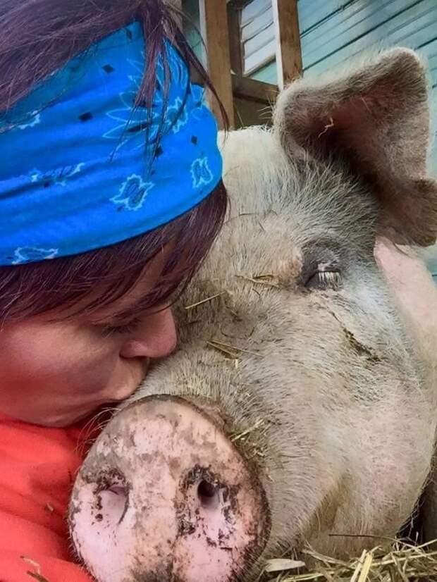 Эта девушка не пожалела денег и времени на то, чтобы спасти своего любимца доброта, дружба, свинья, ферма