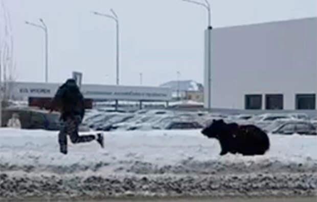 Жителей ВКО напугали гуляющие по улицам медведи