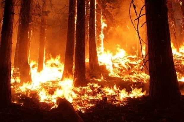Площадь лесных пожаров на территории РФ за сутки сократилась на 20%