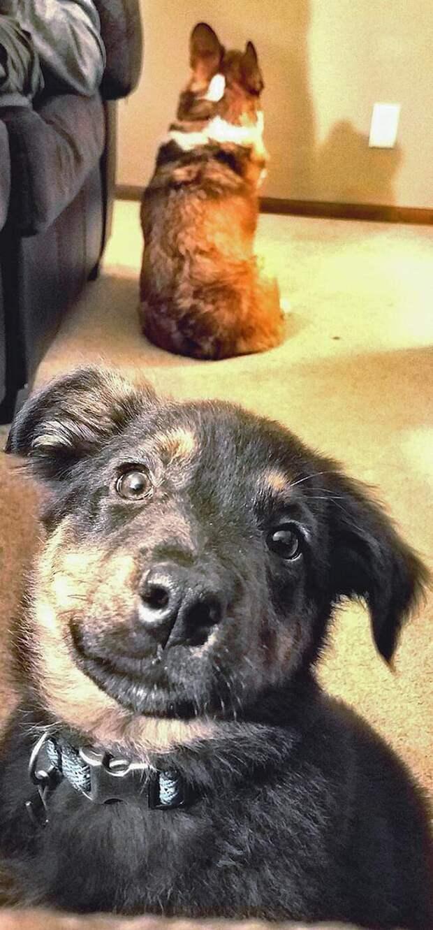 Собаки, которые не очень-то рады появлению в семье нового щеночка
