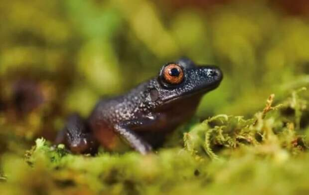 Ученые открыли 20 новых видов животных. Вот самые интересные из них