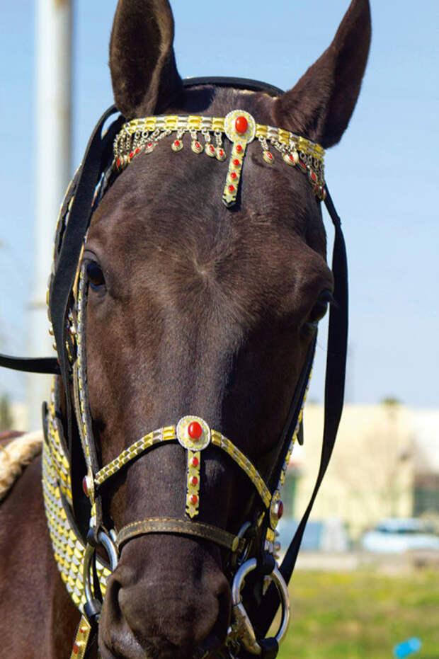 Конь, облаченный в туркменские драгоценности./Фото:turkmen.ru