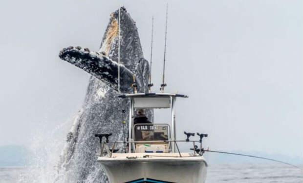 Огромный кит выпрыгнул из воды закрыв своей тенью лодку с рыбаками