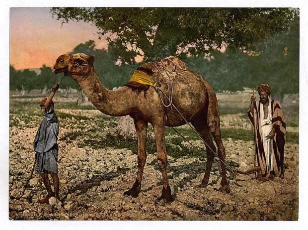 Цветные фотографии Святой земли 120-летней давности.