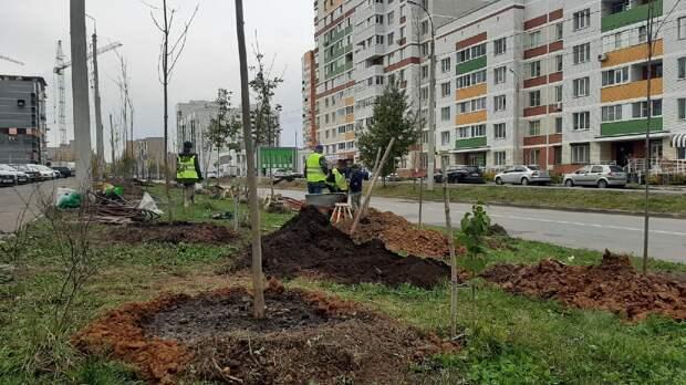 Зеленый щит: аллею ясеней начали высаживать в микрорайоне Берша в Ижевске