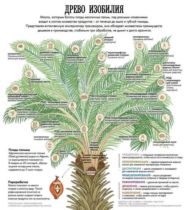 Пальмовое масло: неизбежное зло