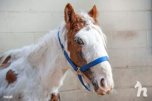 Люди спасли лошадь, которую уже посчитали мертвой. Но она выжила и показала, какой красоткой может быть