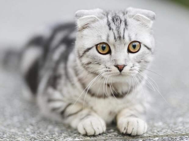 Пять способов сохранить здоровье домашней кошки на долгие годы