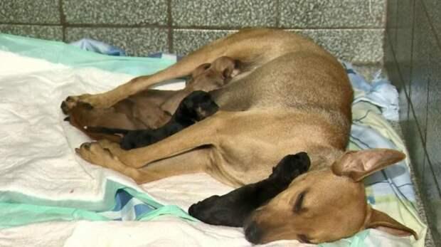 Собака пришла рожать в ветклинику, а папа щенков ждал семейство у входа