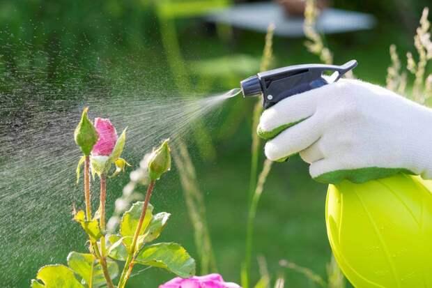 Как защитить свой участок от паутинных клещей и тли. Три эффективных раствора, которые помогут спасти урожай. Готовим своими руками