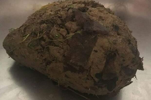 Люди нашли кусок глины, который дышал, но не побоялись спасти создание