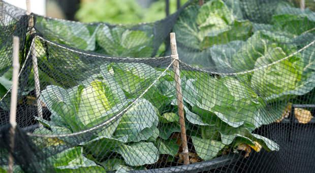 Защитим свой огород от вредителей