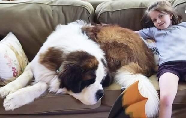 Женщина проехала более 2 тысяч километров, чтобы забрать в свой дом огромного пса, никогда не знавшего любви
