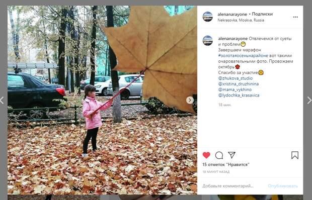 Фото дня: гигантский лист дерева в Некрасовке