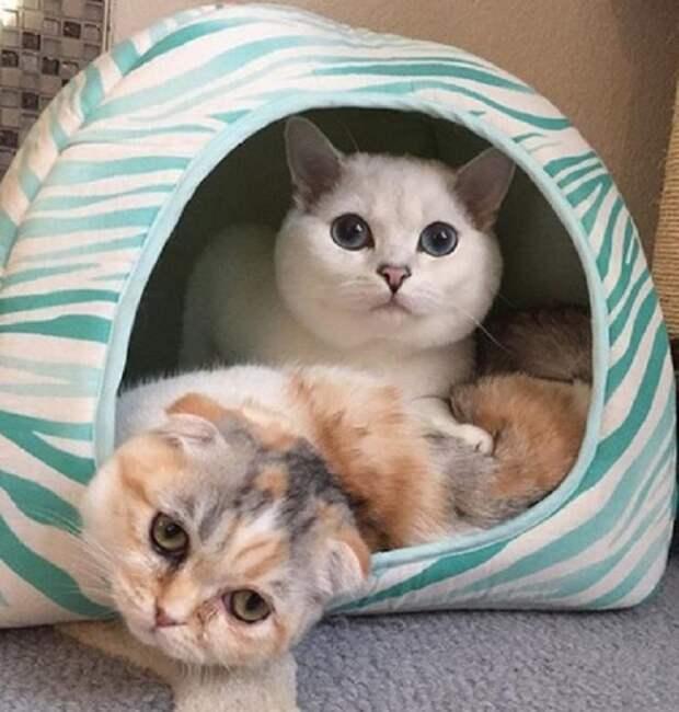 Коты в домике