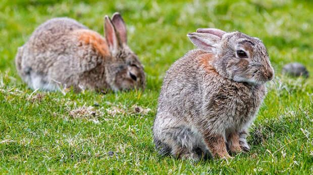 Волонтеры спасают расплодившихся в Серебряном бору Москвы кроликов