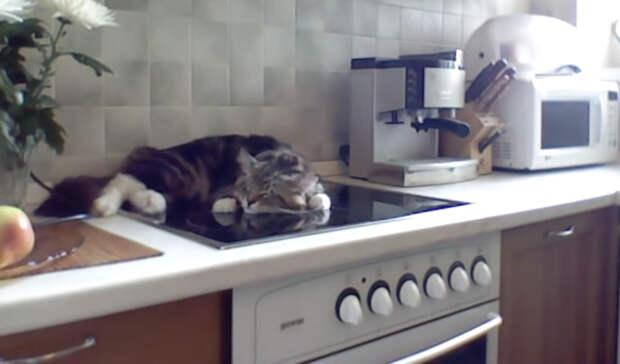 Реакция кота Никифора на замечания: мало того, что разлегся на кухонной плите, так еще и огрызается