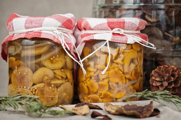 Проверенные рецепты засолки грибов