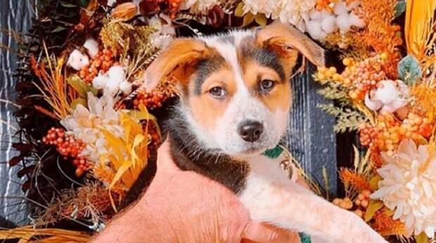 Семья потеряла собаку и искала похожую, но в планы вмешался трогательный щенок с милой мордочкой