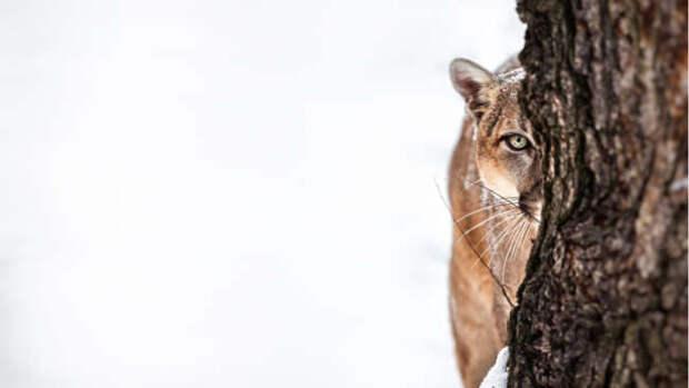 Животные, которые исчезли в 2018 году