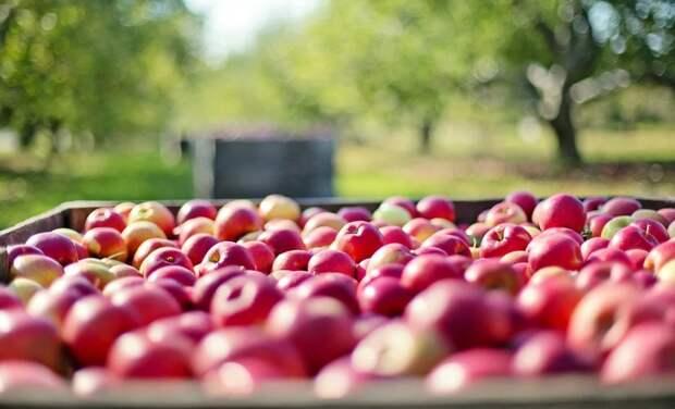 Экспорт сельхозпродукции Крыма с начала года превысил 5 млн долларов