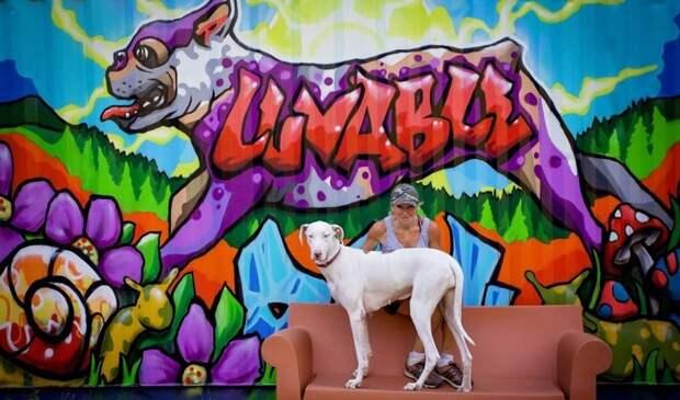 Собачий приют строит для псов частные коттеджи животные, приют, собаки, собачья радость