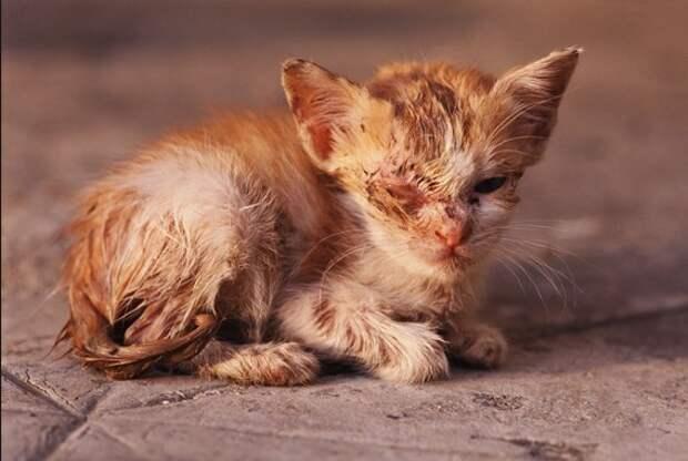 """Ответ на вопрос """"Почему вы помогаете животным,а не людям?"""""""