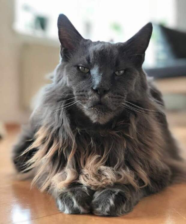 Монстр Кун животные, коты, смешные картинки, юмор