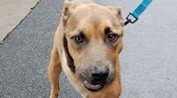 Трижды избежав смерти, бездомный пес восстал, словно Феникс, и наконец-то познал доброту