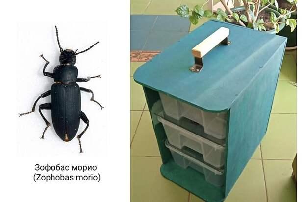 Поедающих пластик жуков обнаружили биотехнологи из Якутии