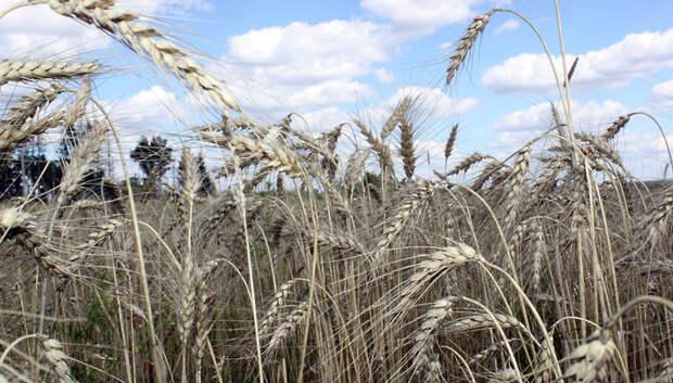 В Подмосковье отметили рост производства в сфере сельского хозяйства