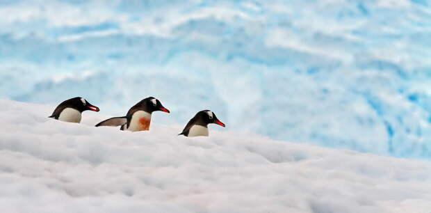 """Потрясающие снимки природы. Работы фотографа-анималиста под лозунгом:"""" земной шар всё-таки маленький"""""""