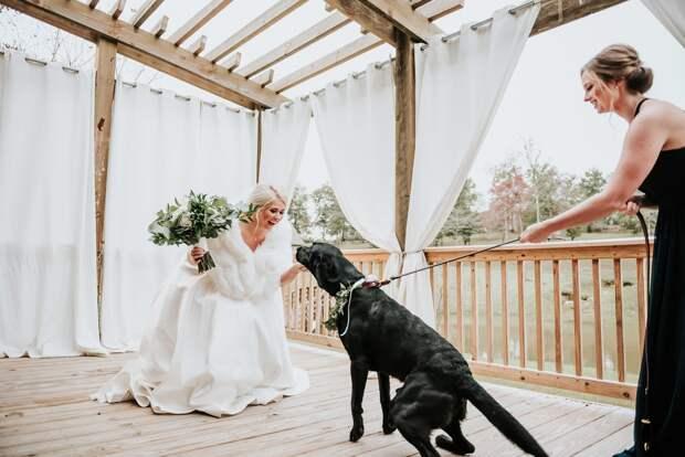 Надо еще разобраться, кто же тут жених. Свадебная фотосессия с псом вызывает вопросы